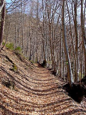 La strada da luoide nel tratto dell'Anello dei Faggi (sv. 8) prossimo a Le Vale