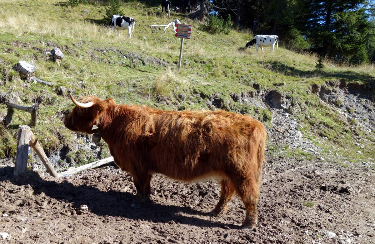 "Coosday: ""Highlander"" a Forcella Losco"