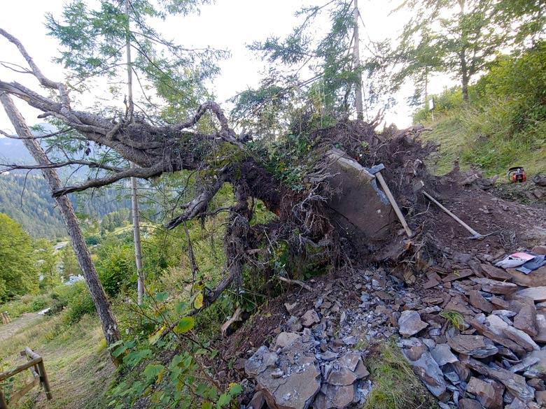 Sistemazione ceppaia lungo sentiero botanico Tita Poa a Pianizole -foto 002