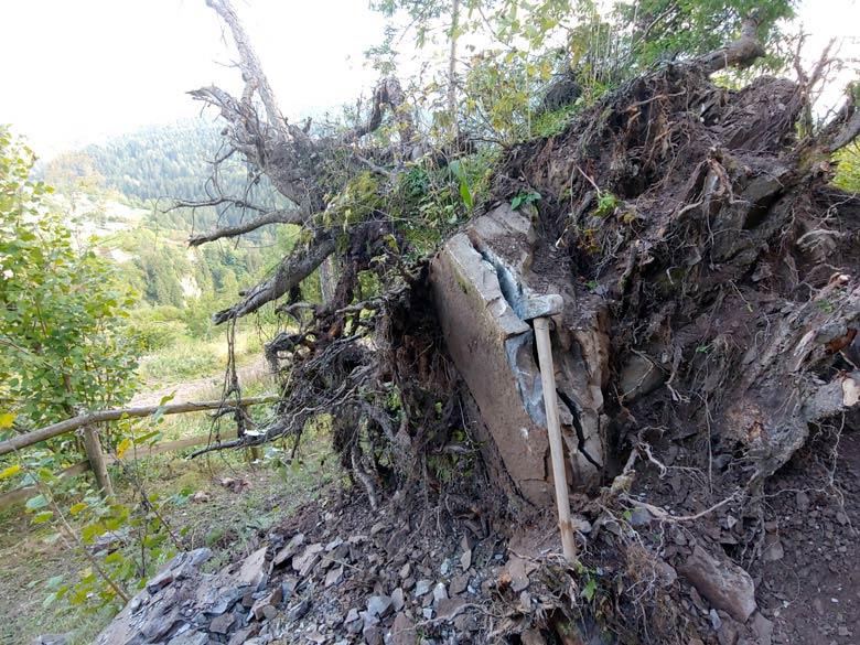 Sistemazione ceppaia lungo sentiero botanico Tita Poa a Pianizole -foto 003
