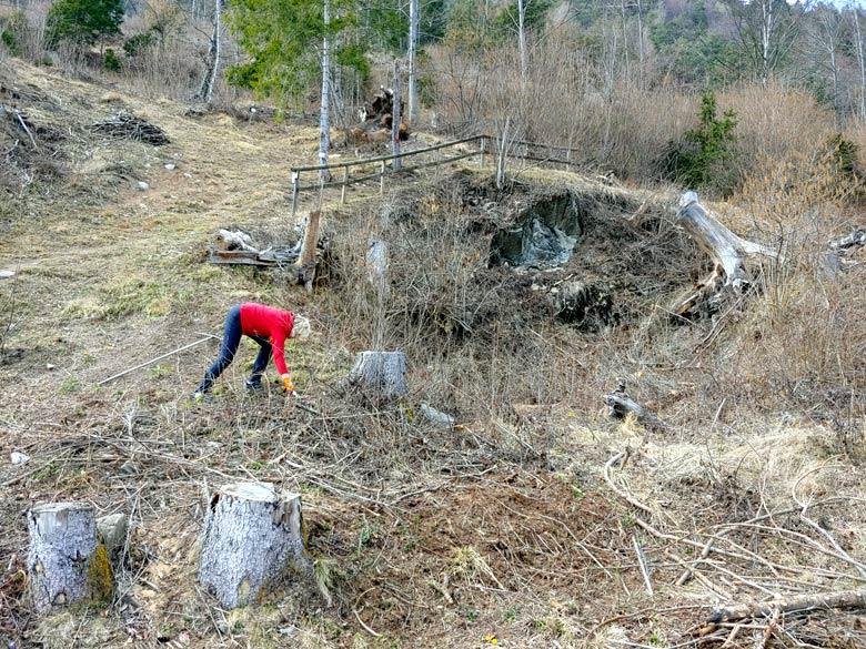 """Pulizia da ramaglia (del taglio """"Enel"""" del 2013) all'inizio del sentiero botanico Tita Poa 17-03-2019 - foto 01"""