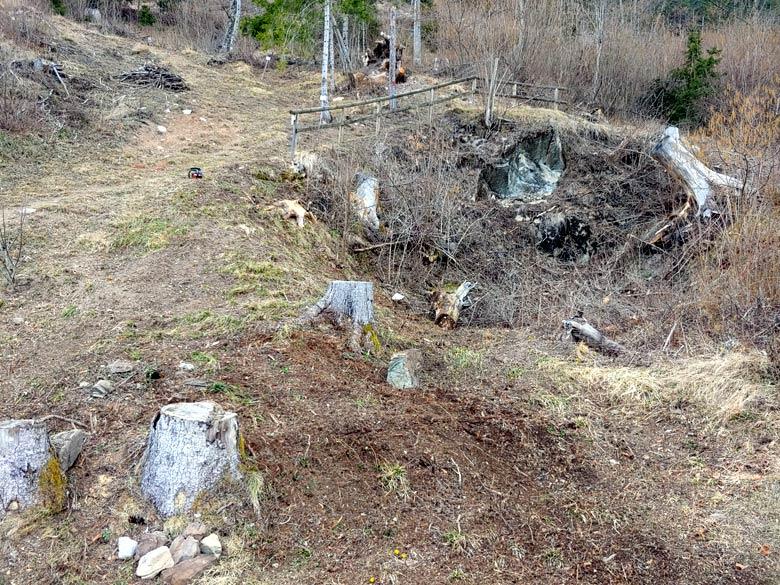 """Pulizia da ramaglia (del taglio """"Enel"""" del 2013) all'inizio del sentiero botanico Tita Poa 17-03-2019 - foto 02"""