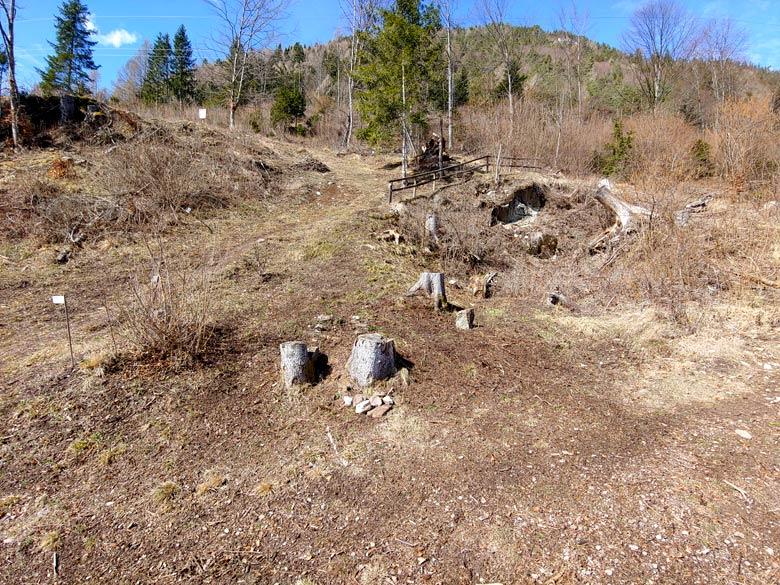 """Pulizia da ramaglia (del taglio """"Enel"""" del 2013) all'inizio del sentiero botanico Tita Poa 17-03-2019 - foto 03"""