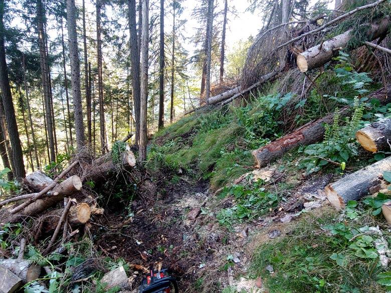 Intervento del 15-09-2019 con taglio schianti sul tratto del Troi dele Ciaure sopra Loreto (piante secche)