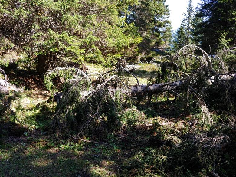 Rimozione schianti Anello dei Forti, intervento del 16-09-2019 - foto 001