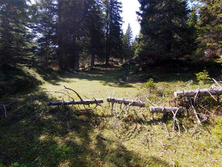 Rimozione schianti Anello dei Forti, intervento del 16-09-2019 - foto 003