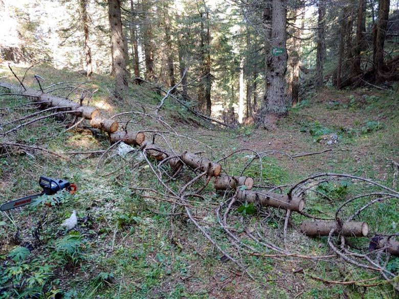 Rimozione schianti lungo Anello dei Forti tra 5 imbocchi e poco prima della Busa dele Ciare (21-09-2019) - foto 002