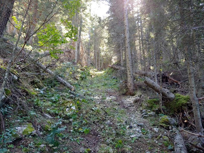 Rimozione schianti lungo Anello dei Forti tra 5 imbocchi e poco prima della Busa dele Ciare (21-09-2019) - foto 005