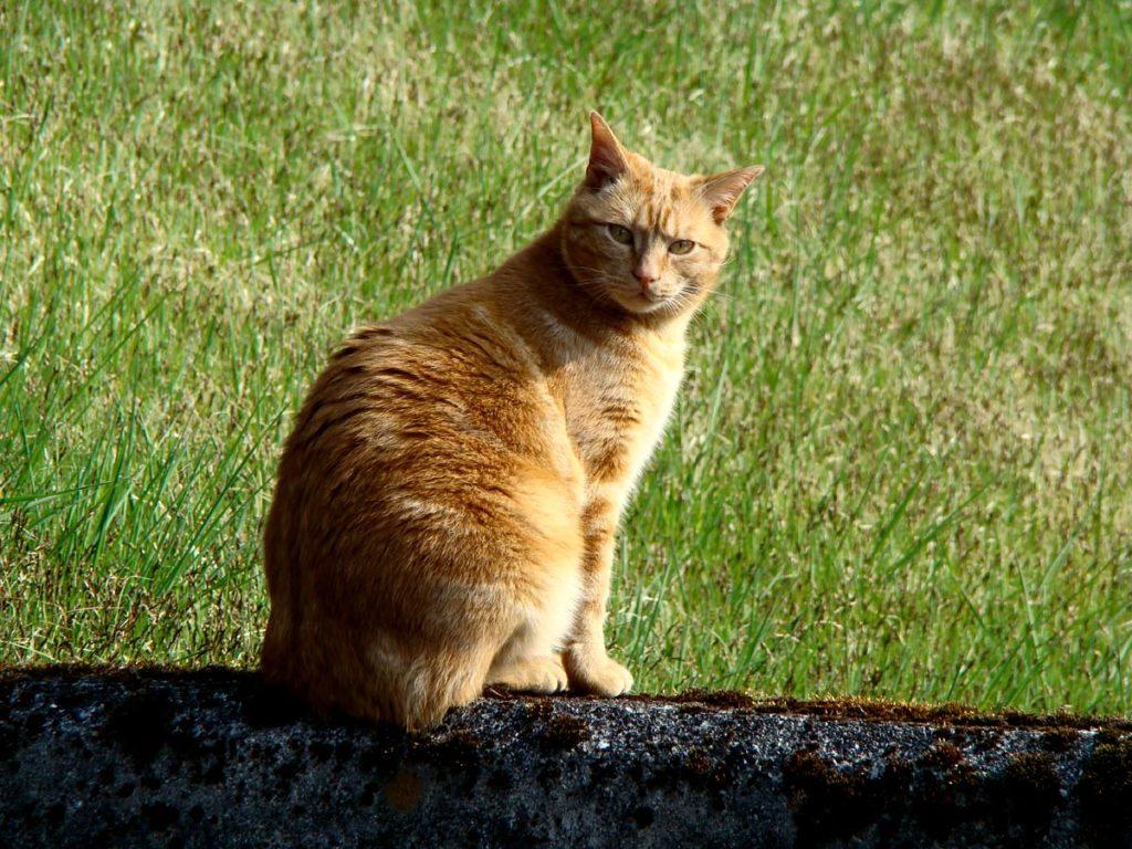 Gatto: