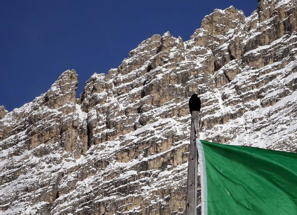 Gracchio alpino sul pennone della bandiera del rifugio Col de Varda; sullo sfondo i contrafforti della Cima Cadin di Misurina