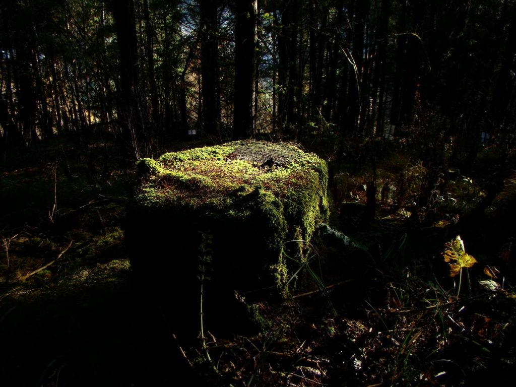 Ceppaia nel bosco
