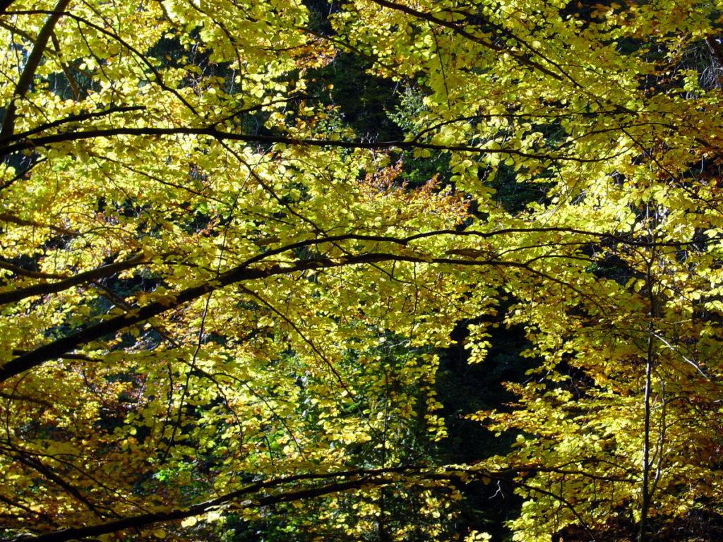 Pioggia di foglie autunnali