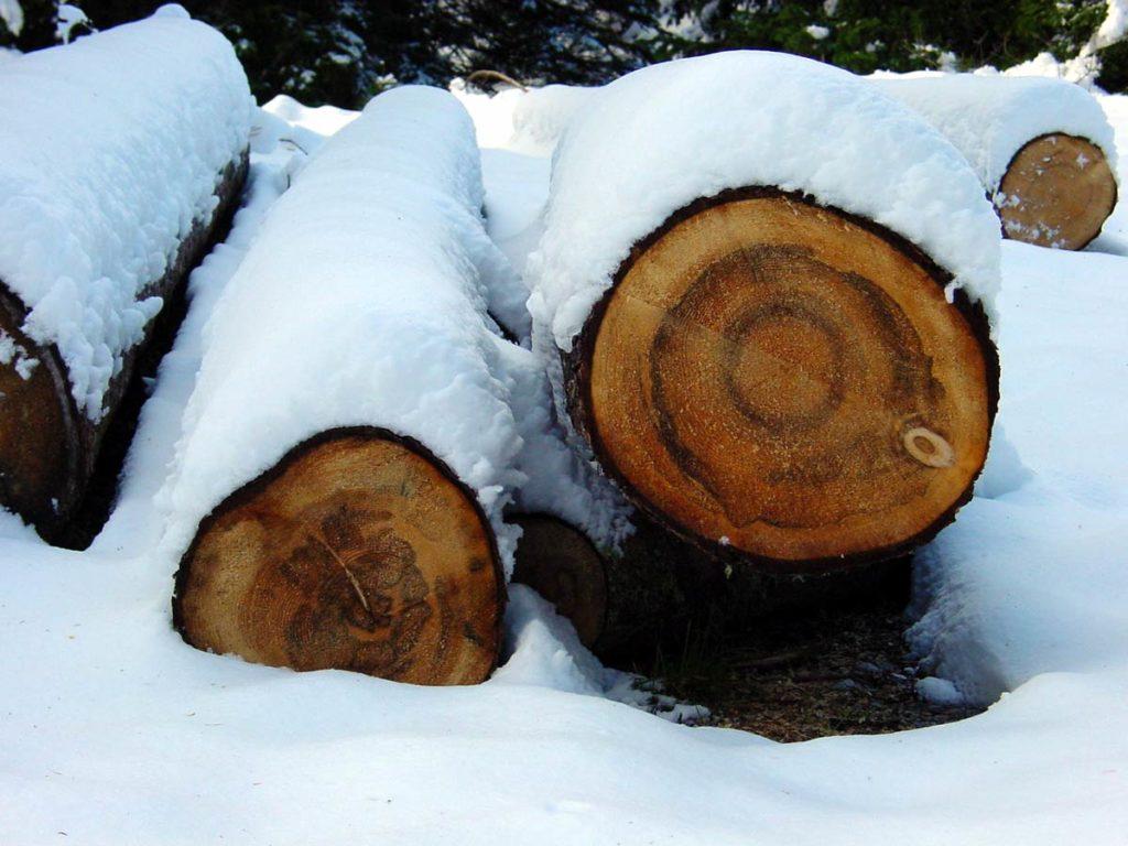 Tronchi sotto la neve