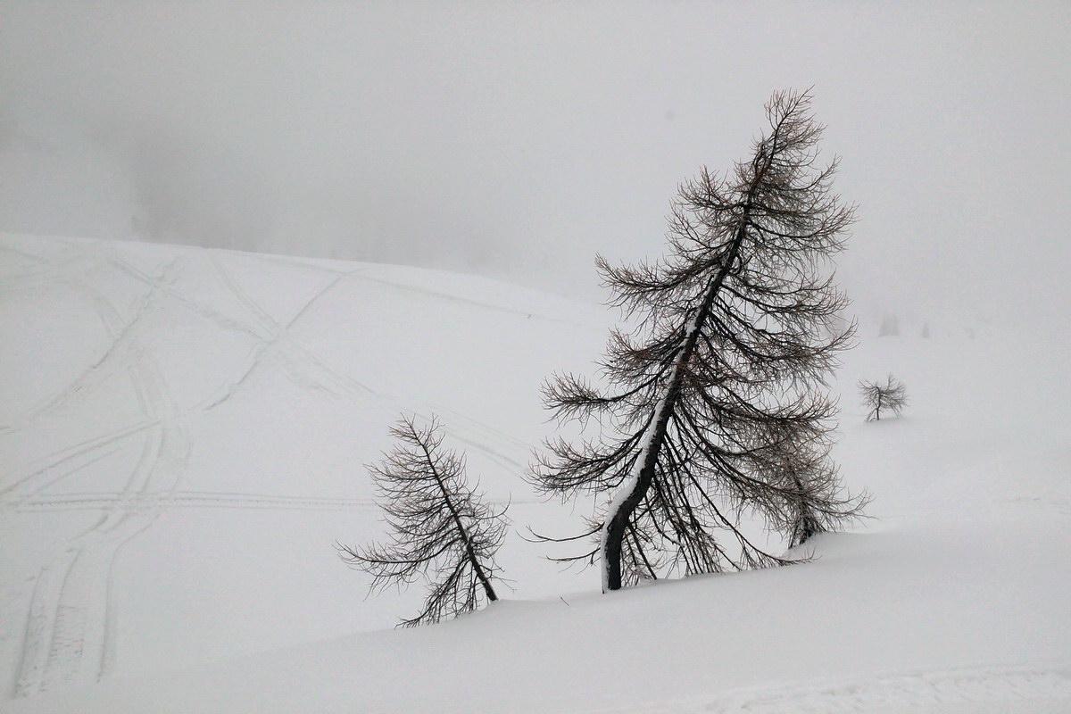 Alberi nella nebbia al Ciadin de Razo
