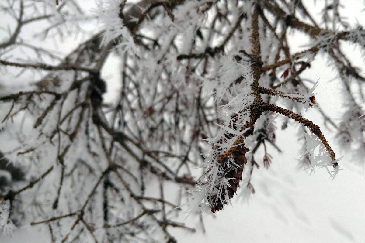 Pigna con cristalli di ghiaccio