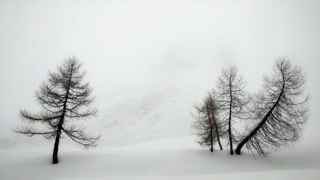 Alberi nella nebbia ai piedi del Col Dumela